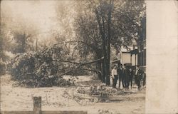 Damaged Trees Along Street