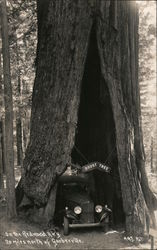 On the Redwood Highway - Doust Tree