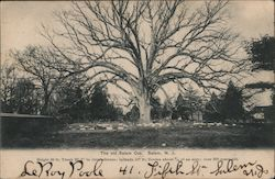 The Old Salem Oak Postcard