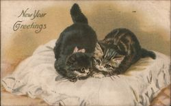 New Year Greetings - Two Cats on a Pillow