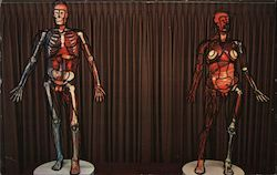 The Vesalius Couple