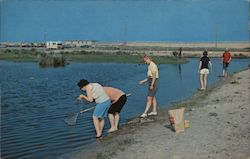 Crabbing for Blue Crabs, Assateague Island National Park