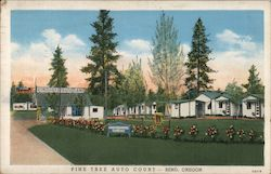 Pine Tree Auto Court Postcard