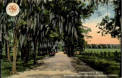 Automobile Road Between Ocala And Silver Springs