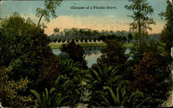 Glimpse Of A Florida Grove