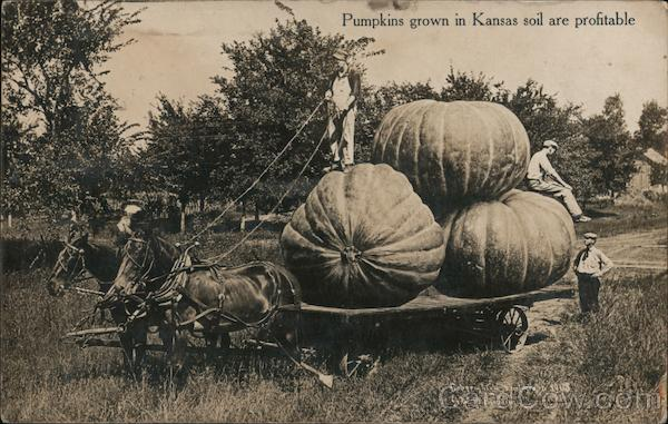 Pumpkins Grown in Kansas Soil are Profitable