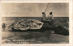 Cutting Bowhead Whale Postcard