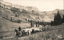 Pack Train Off of the High Country