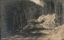 Through the Tall Trees - Mohawk Trail Postcard
