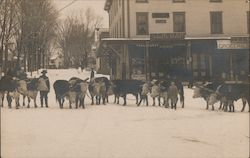 Oxen Team in Winter, G. F. Butler Variety Store