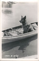 "Dog in Canoe: ""Chips is Ready"""