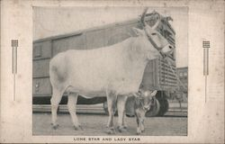 Lone Star and Lady Star