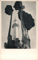 Minaret and Cypress Trees