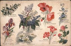 Illustrations and descriptions of various flowers Postcard
