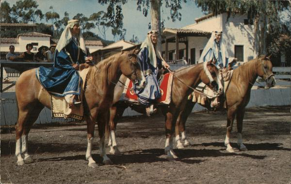 Pure-Blooded Arabian Horses