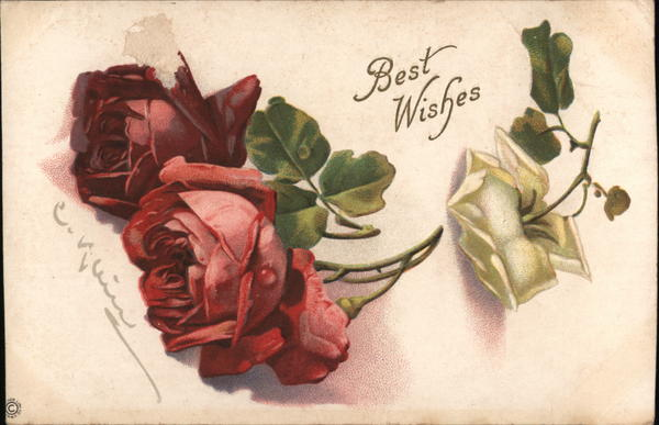 Red and White Roses - Best Wishes C. Klein Flowers