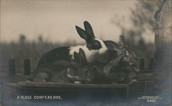 A Close Conference - Bunnies