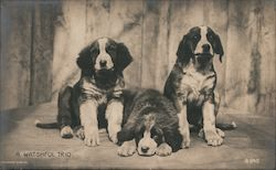 Dogs - A watchful trio