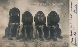 Pinkertons by Birth