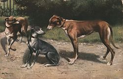 Three Hounds Outside