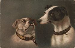 Two Dogs wearing Collars