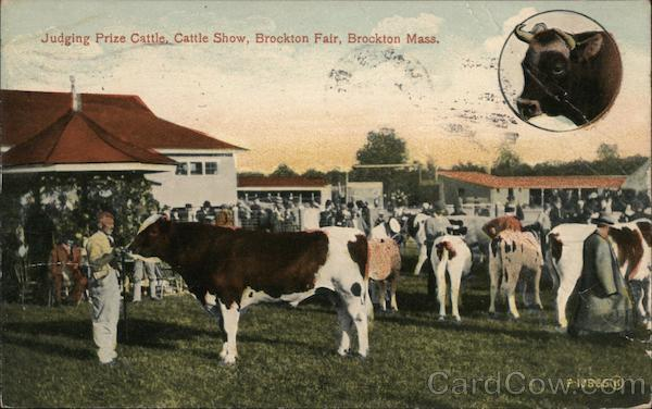 Judging Prize Cattle, Cattle Show, Brockton Fair Massachusetts