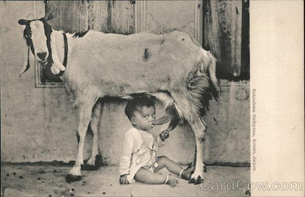 A Child drinking milk from a goat India Goats