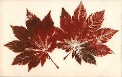 Red leaves, japanese