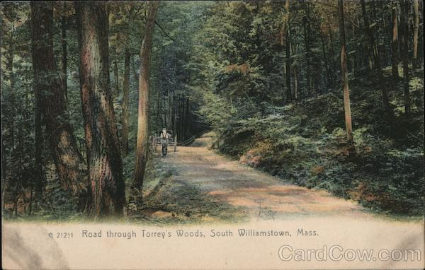 Road Through Torrey's Woods South Williamstown Massachusetts