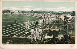 Evan's Field-The Athletic Grounds of the Atlantic Fleet Postcard