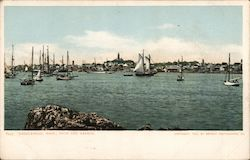 From the Harbor Postcard
