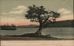 The Old Oak, Meredith Bay