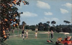 Golfing in Florida with orange tree Postcard