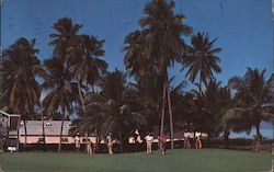 Golfing in the Bahamas Country Club Postcard