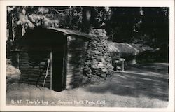 Tharp's Log Cabin, Giant Forest grove