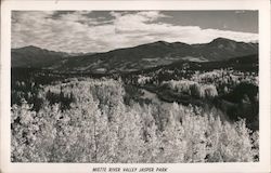 Miette River Valley - Jasper Park Postcard