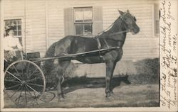 Woman in Cart Pulled by Horse
