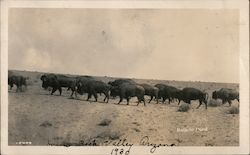 1930 Herd of Buffalo, House Rock Valley