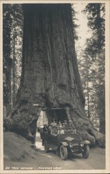 Driving Through the Big Tree, Mariposa Grove