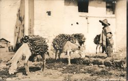 Peasant with two leased donkeys