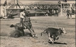 Calf Roping Postcard