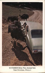 5-H Ranch Drive Thru Animal Park Postcard