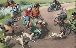 A Cat Walking Dogs Disrupts Cats Riding Bicycles & Motorcycles.