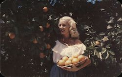 In a Florida Orange Grove Postcard