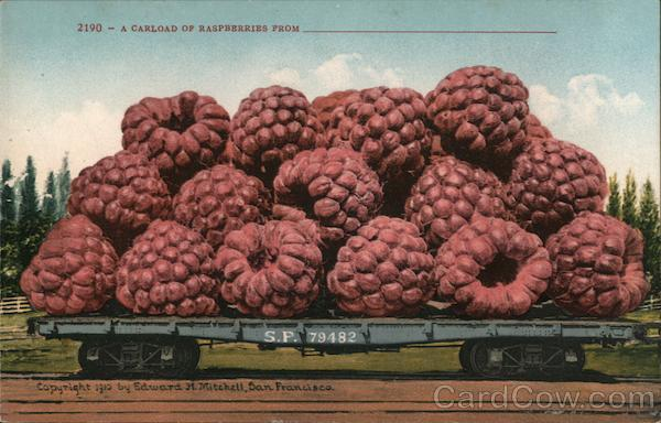 A Carload of Raspberries From______ Exaggeration