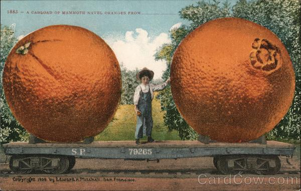 A Carload of Mammoth Navel Oranges From_______ Exaggeration