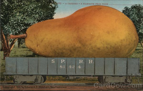 A Carload - A Mammoth Pear From__ Exaggeration