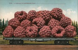 A Carload of Raspberries From______ Postcard