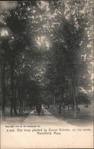 Elm Trees Planted by Daniel Webster, On His Estate Marshfield Massachusetts