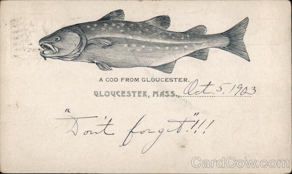 A Cod From Gloucester Massachusetts